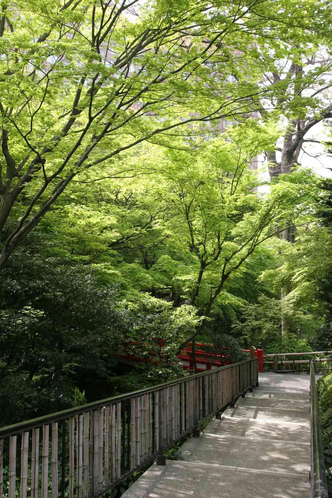 日本庭園『ほたる沢』