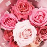 brides_img661